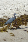 I'm also 3 for 3 with wading birds. (This is a little blue heron).
