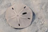 Underwater Sand Dollar