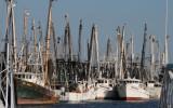 Shrimping Fleet near Doc Ford's Resturant