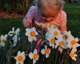Grace enjoying the Daffodils Narcissus Sentinel