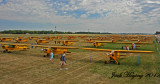 A portion of the 175+ yellow Piper J3 Cubs at Oshkosh 2012