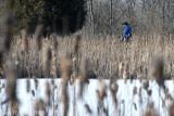 Circling Cedar Pond