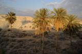 Jordan Valley, near Deir Hajla (monastery of St. Gerasimus)