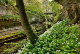 How Stean Gorge, Lofthouse, Nidderdale 2239hdr.jpg