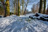 cottingham park.jpg