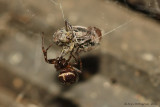 Cobweb-Weaver---0088.jpg