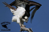 Osprey: Comfort movements - adult - full body stretch
