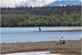 Alaska Katmai 5957.jpg