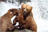 combat - bear fight 3834.JPG