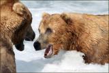 bear tension 3910.jpg
