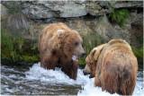 bear tension 4209.jpg