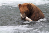 fishing bear 4005.jpg