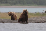 mom and cubs in the rain 5896.jpg
