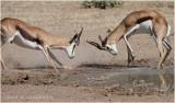 Springbok 7400
