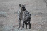 Hyène - Hyena 7616
