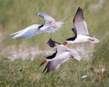 Birds of Nickerson Beach