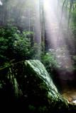 The Light (1)
