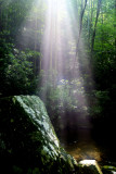 The Light (2)