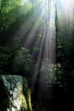 The Light (3)