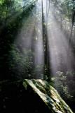 The Light (4)
