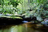Picture Made on Basin Creek