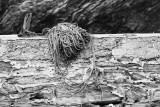 Forgotten rope,
