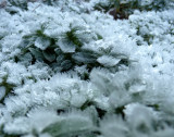 Patterns & Shapes - Ice Crystals