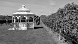 Pellegrini Vineyards, Cutchogue