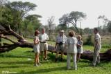 Camp Satara, Parc Kruger, 20 novembre 2007