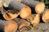 Holz (107687)