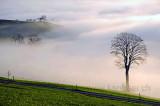 Nebel (118630)