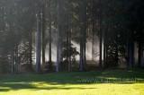 Wald (118715)