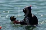 A Lagoa de Óbidos em 26 de agosto de 2011