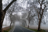 A Estrada da Foz