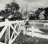 1964 - David Booth riding a pony at Dressel's Dairy on Milam Dairy Road west of the airport