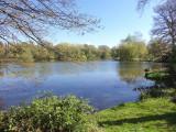 NEWELLS LAKE . 3