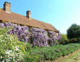 WISTERIA CLAD HOUSE