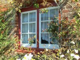 ROSEHIP WINDOW