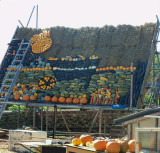 PUMPKIN DISPLAY IN CONSTRUCTION