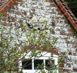 FACES ON THE COTTAGE