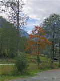 A GOLDEN TREE   631