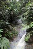 Maliau River Tributary