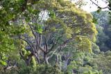 dipterocarp forest