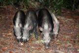 Breaded pigs