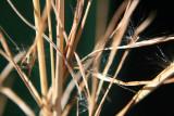 Fuzzy Grass