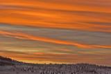 Penguins at Neck at Sunset.jpg