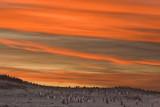 Penguins at Neck at Sunset 2.jpg