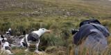 Dave photographing Albatross.jpg