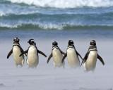 Magellanic Penguins in Sandstorm.jpg