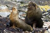 Sea Lion Family.jpg